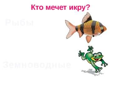 Кто мечет икру? Рыбы Земноводные
