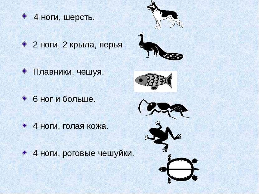4 ноги, шерсть. 2 ноги, 2 крыла, перья Плавники, чешуя. 6 ног и больше. 4 ног...