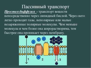 Пассивный транспорт Простая диффузия - транспорт веществ непосредственно чере...