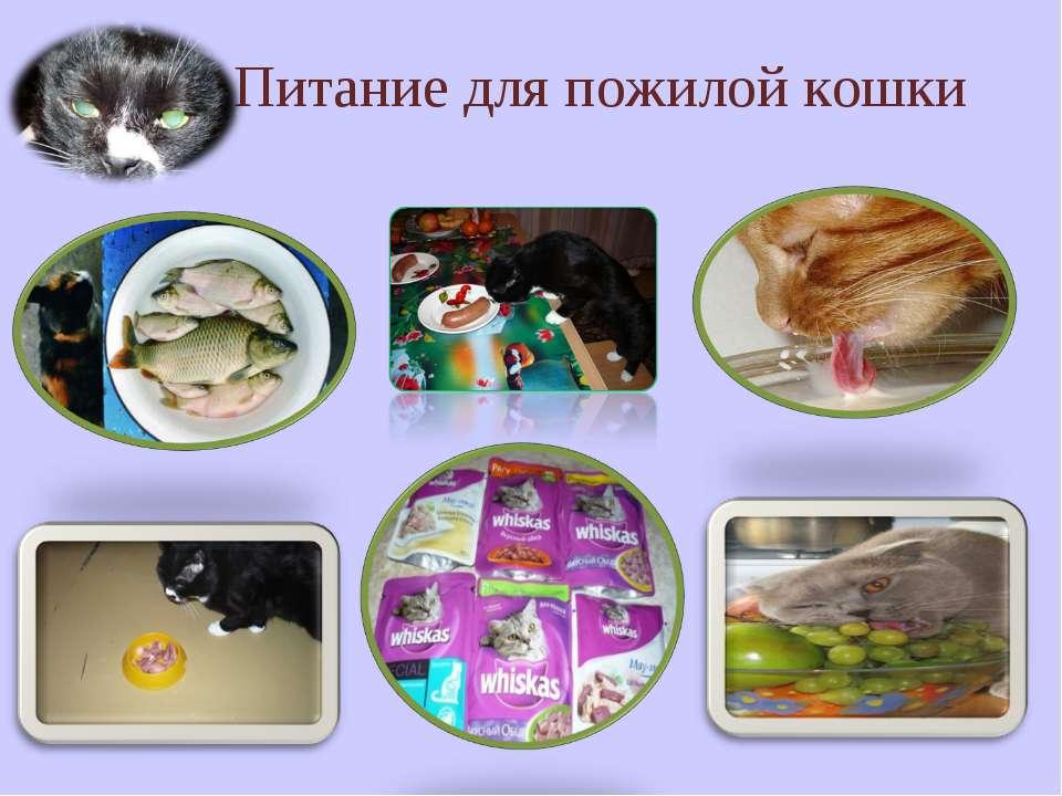 Питание для пожилой кошки