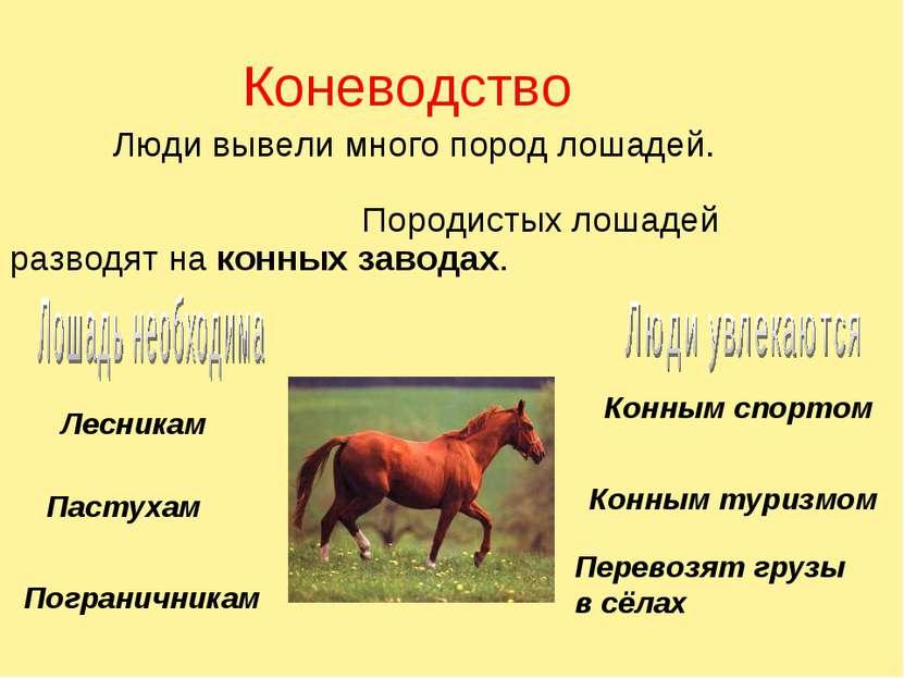 Коневодство Люди вывели много пород лошадей. Породистых лошадей разводят на к...