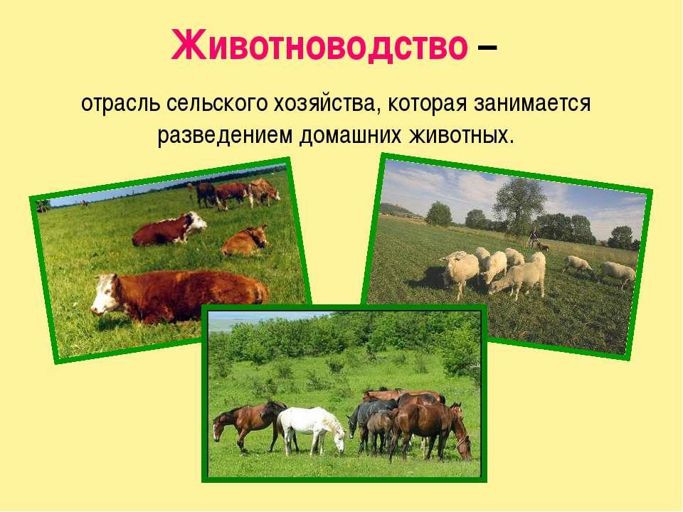 Животноводство – отрасль сельского хозяйства, которая занимается разведением ...