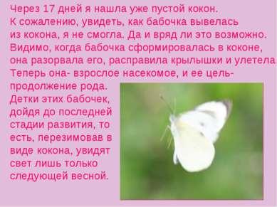 Через 17 дней я нашла уже пустой кокон. К сожалению, увидеть, как бабочка выв...