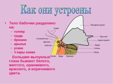 Тело бабочки разделено на: голову грудь брюшко крылья усики 3 пары ножек Боль...
