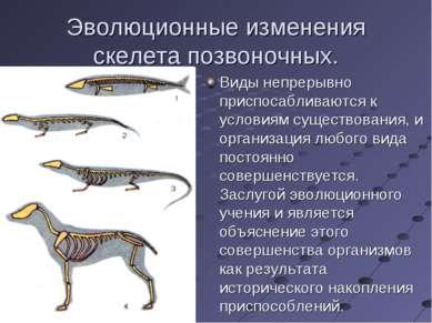 Эволюционные изменения скелета позвоночных. Виды непрерывно приспосабливаются...