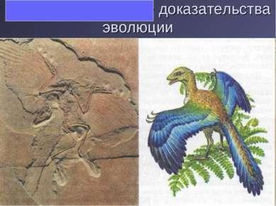 Палеонтологические доказательства эволюции