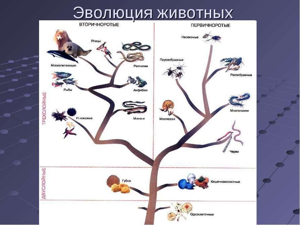 Эволюция животных