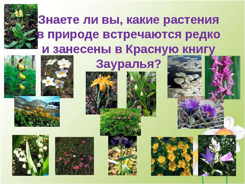 Знаете ли вы, какие растения в природе встречаются редко и занесены в Красную...