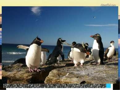 Остров Маккуори географические координаты - 55°ю.ш., 159°в.д. Остров Маккуори...