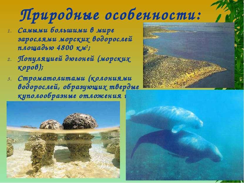 Природные особенности: Самыми большими в мире зарослями морских водорослей пл...
