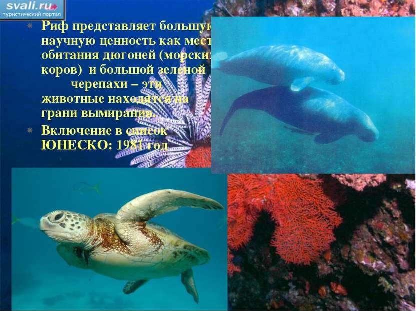 Риф представляет большую научную ценность как место обитания дюгоней (морских...