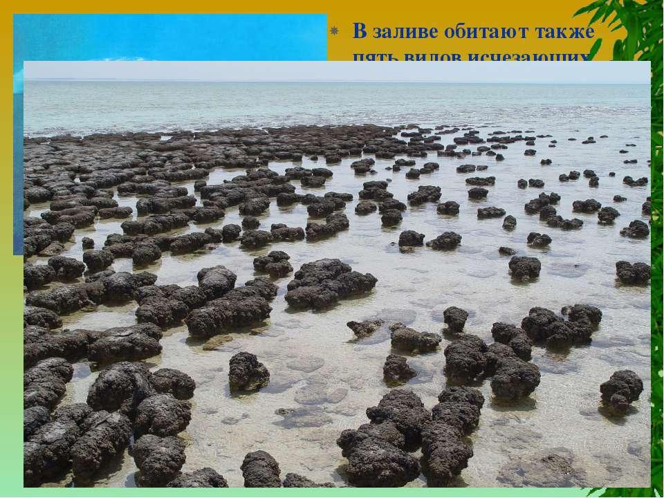 В заливе обитают также пять видов исчезающих морских млекопитающих. Включение...