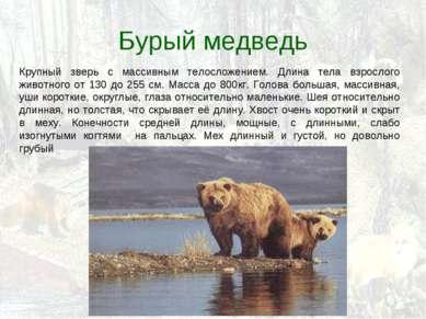 Бурый медведь Крупный зверь с массивным телосложением. Длина тела взрослого ж...