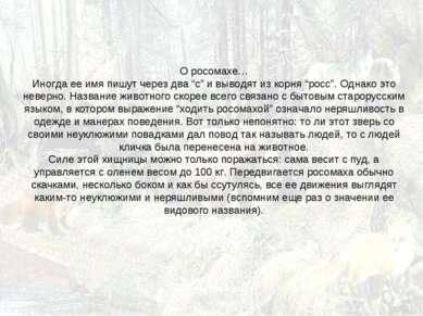 """О росомахе… Иногда ее имя пишут через два """"с"""" и выводят из корня """"росс"""". Одна..."""