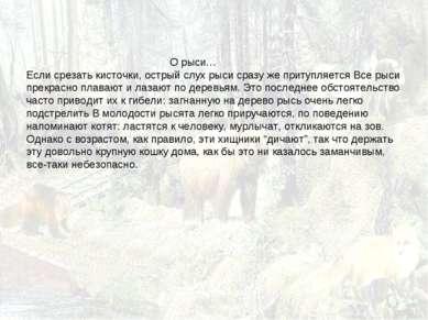 О рыси… Если срезать кисточки, острый слух рыси сразу же притупляется Все рыс...