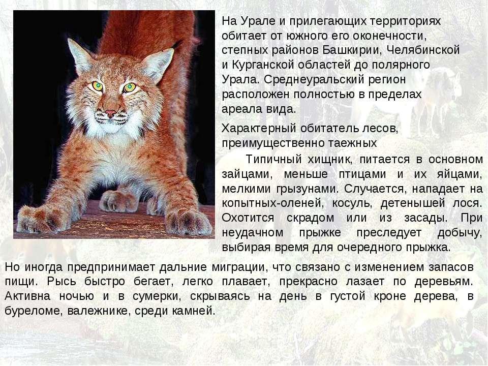 На Урале и прилегающих территориях обитает от южного его оконечности, степных...