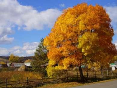Der Herbst zieht durch die Fluren, durch Walder,Berg und Grund