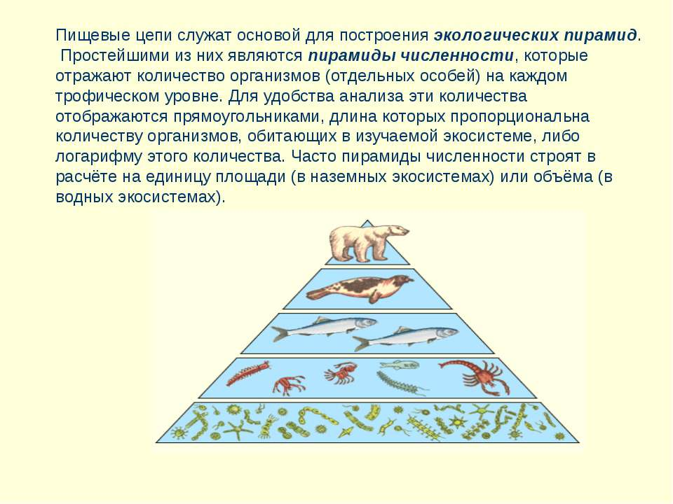 Пищевые цепи служат основой для построения экологических пирамид. Простейшими...