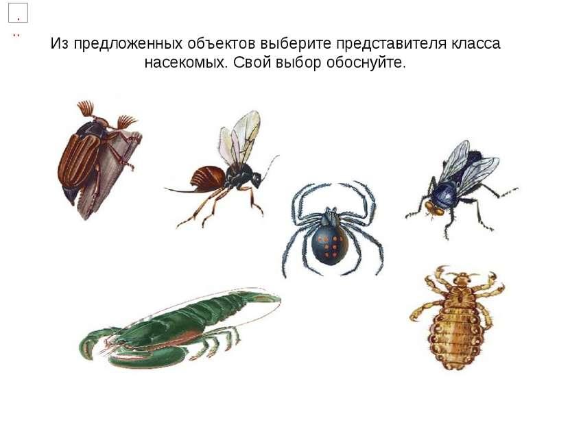 Из предложенных объектов выберите представителя класса насекомых. Свой выбор ...