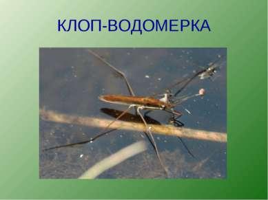 КЛОП-ВОДОМЕРКА