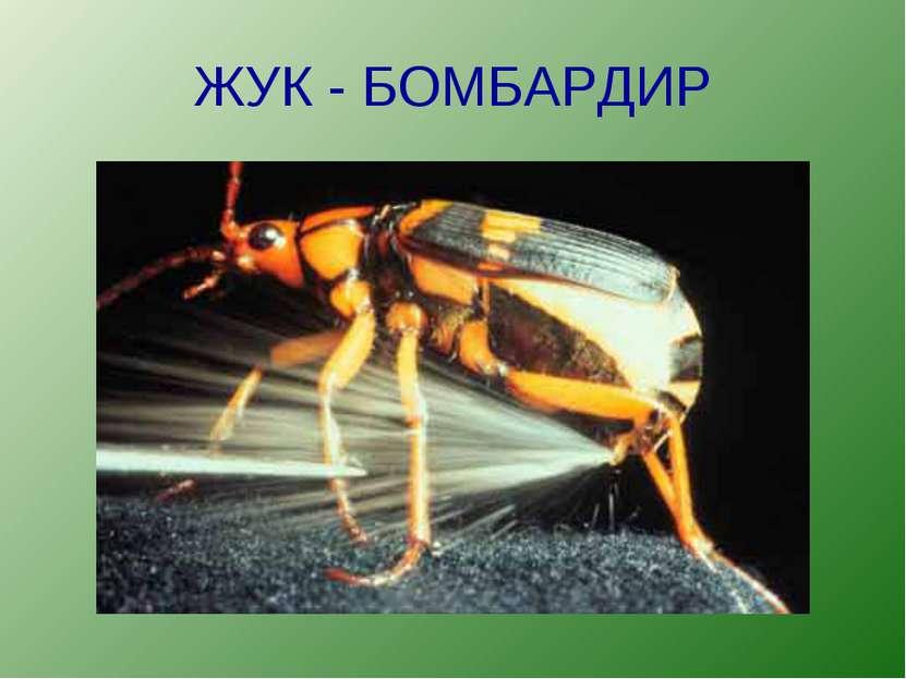 ЖУК - БОМБАРДИР