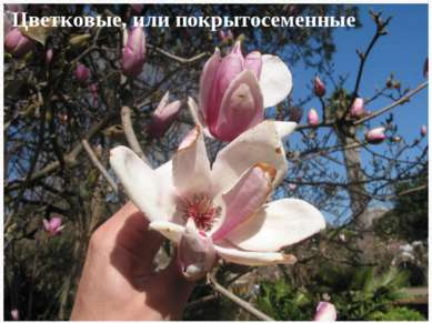 Цветковые, или покрытосеменные
