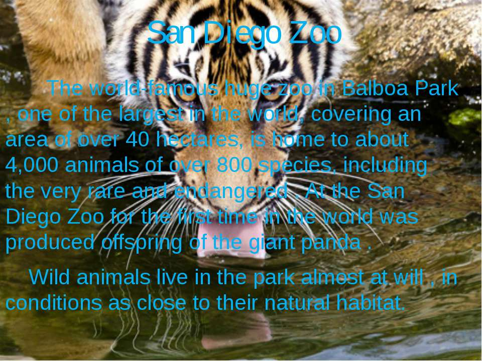San Diego Zoo The world-famous huge zoo in Balboa Park , one of the largest i...