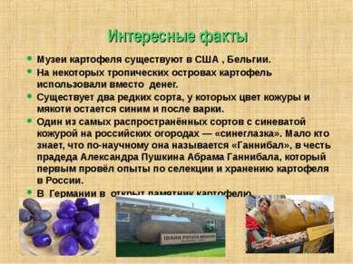 Интересные факты Музеи картофеля существуют в США , Бельгии. На некоторых тро...
