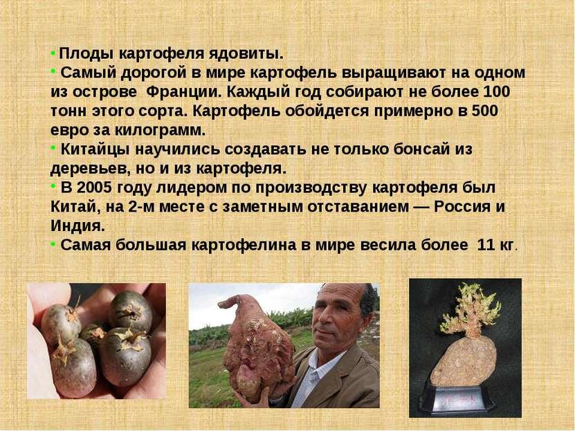 Плоды картофеля ядовиты. Самый дорогой в мире картофель выращивают на одном и...