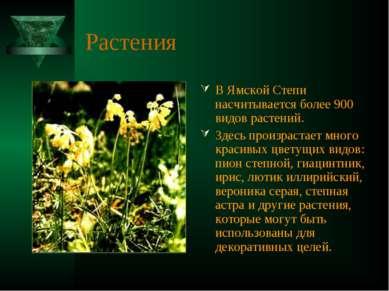 Растения В Ямской Степи насчитывается более 900 видов растений. Здесь произра...