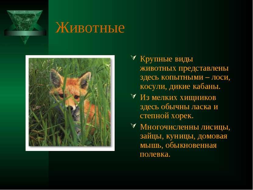 Животные Крупные виды животных представлены здесь копытными – лоси, косули, д...