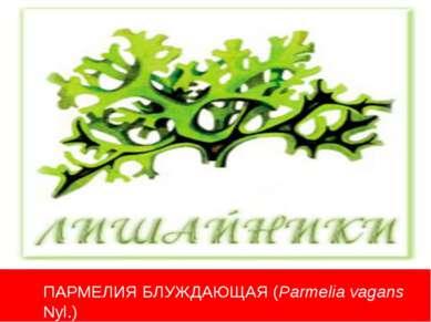 ПАРМЕЛИЯ БЛУЖДАЮЩАЯ (Parmelia vagans Nyl.)