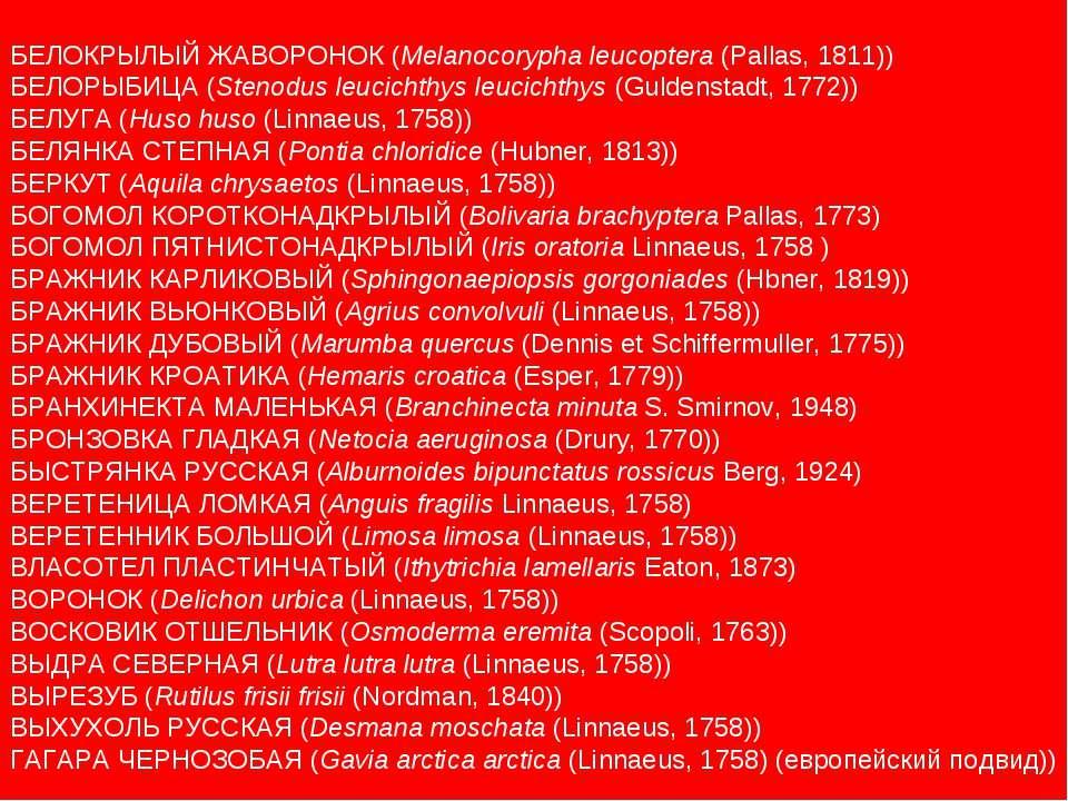 БЕЛОКРЫЛЫЙ ЖАВОРОНОК (Melanocorypha leucoptera (Pallas, 1811)) БЕЛОРЫБИЦА (St...