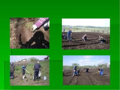 Озеленение нашей школы