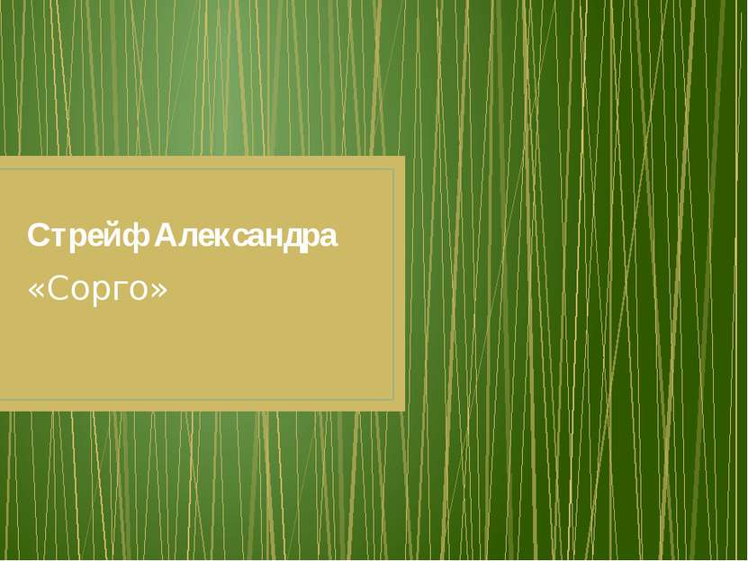 Стрейф Александра «Сорго»