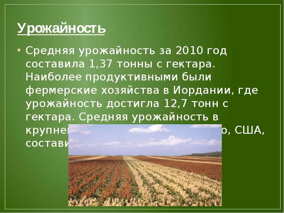 Урожайность Средняя урожайность за 2010 год составила 1,37 тонны с гектара. Н...