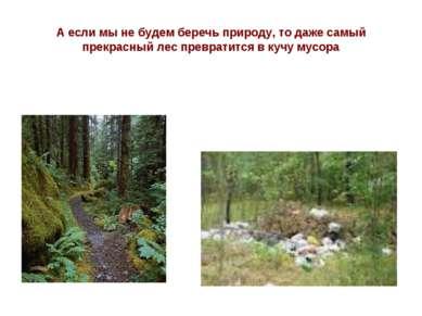 А если мы не будем беречь природу, то даже самый прекрасный лес превратится в...