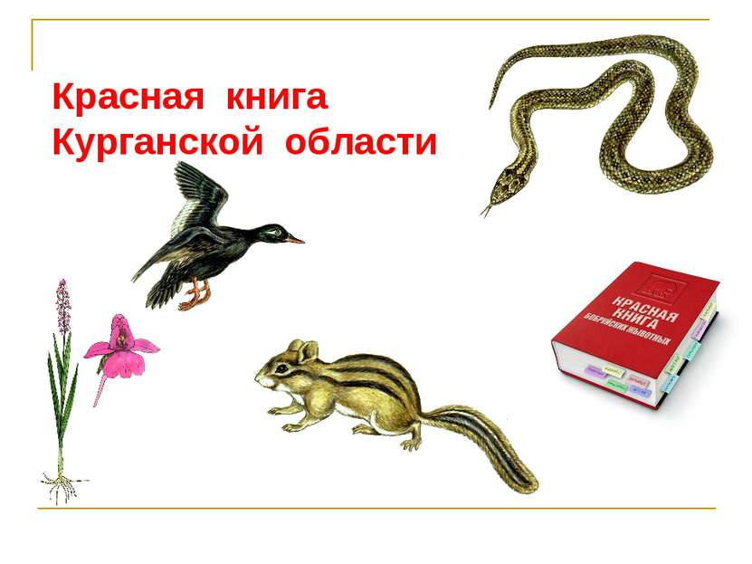 Красная книга Курганской области