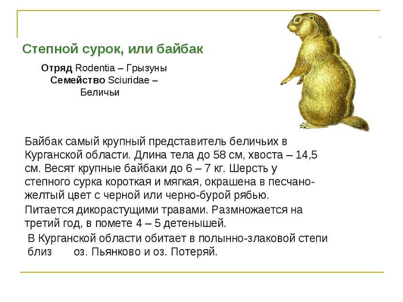 Степной сурок, или байбак Отряд Rodentia – Грызуны Семейство Sciuridae – Бели...