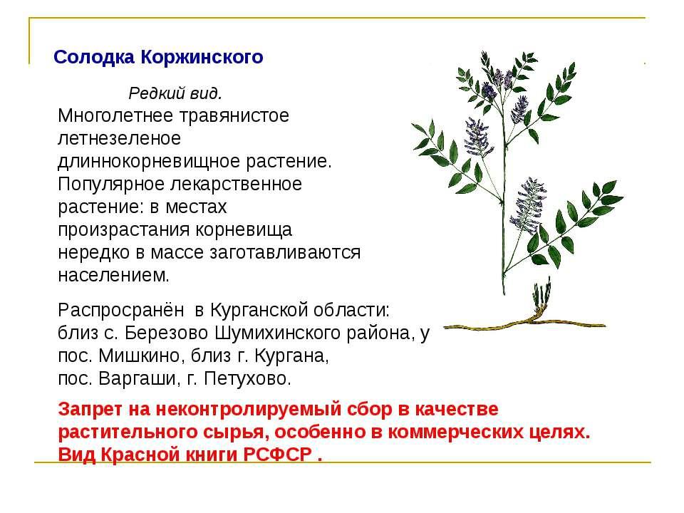 Солодка Коржинского Редкий вид. Распросранён в Курганской области: близ с.Бе...