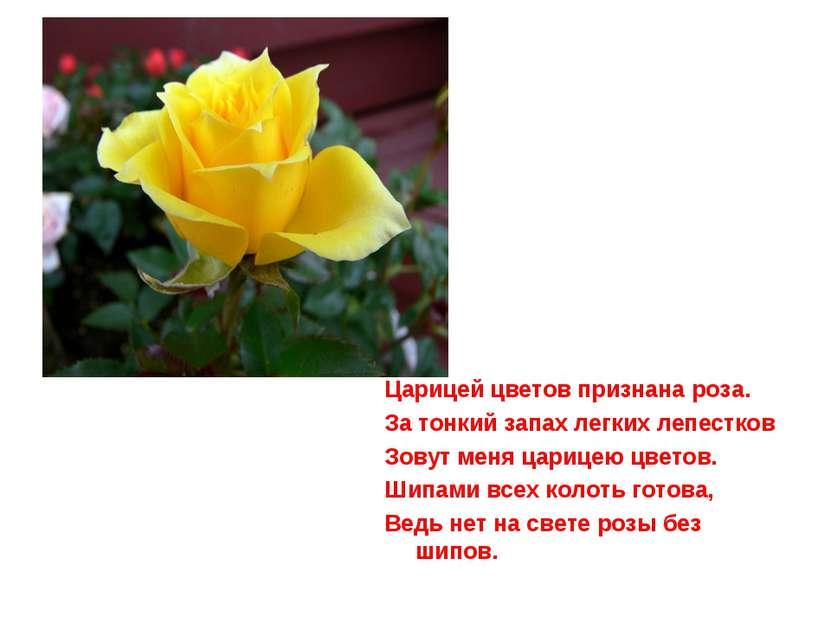 Царицей цветов признана роза. За тонкий запах легких лепестков Зовут меня цар...
