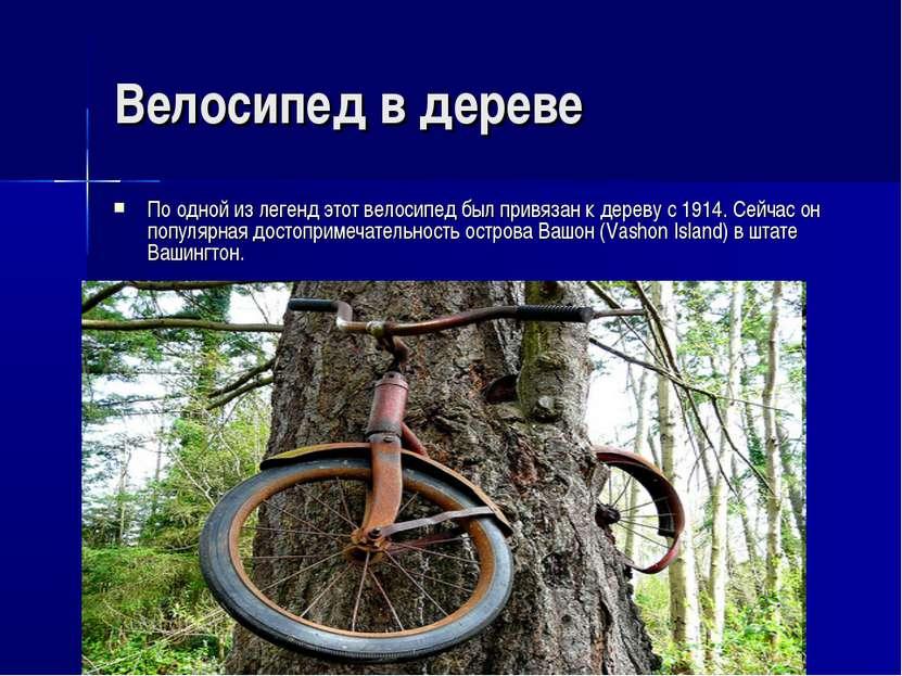Велосипед в дереве По одной из легенд этот велосипед был привязан к дереву с ...