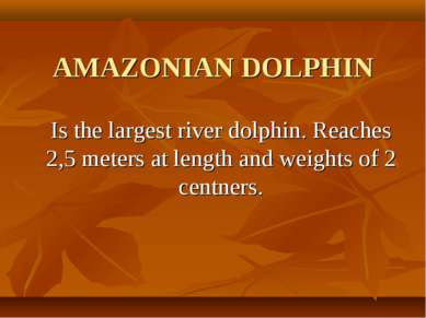 AMAZONIAN DOLPHIN Is the largest river dolphin. Reaches 2,5 meters at length ...