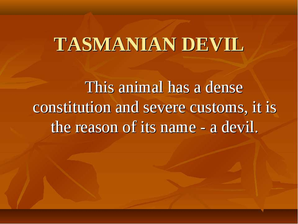 TASMANIAN DEVIL This animal has a dense constitution and severe customs, it i...