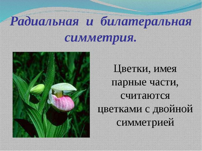 Радиальная и билатеральная симметрия. Цветки, имея парные части, считаются цв...