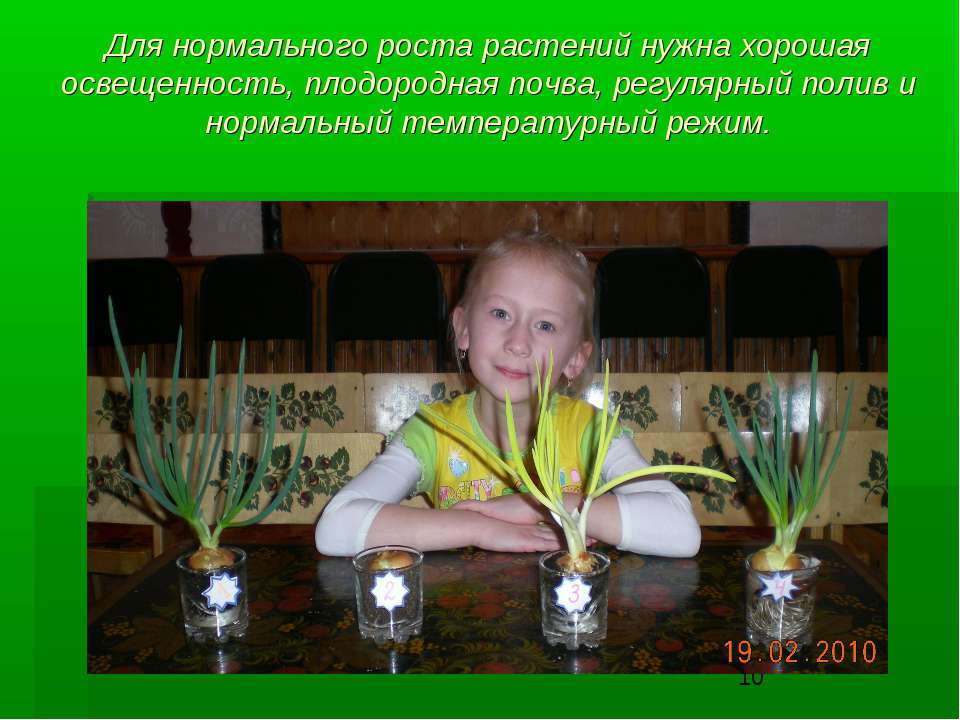 Для нормального роста растений нужна хорошая освещенность, плодородная почва,...