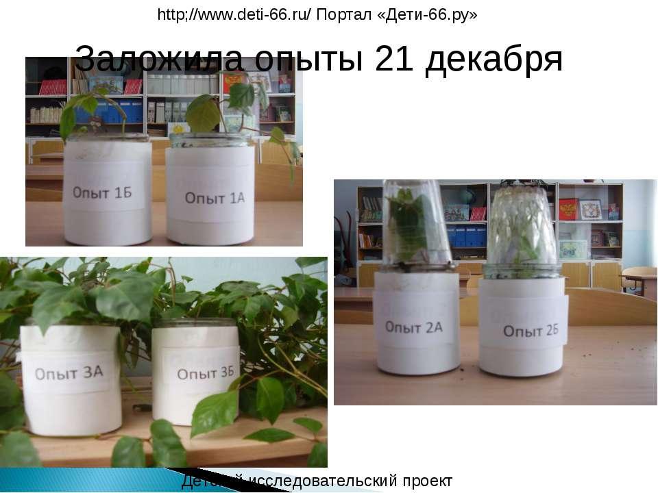 Заложила опыты 21 декабря Детский исследовательский проект http;//www.deti-66...