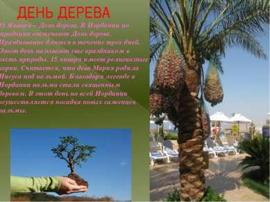 ДЕНЬ ДЕРЕВА 15 Января – День дерева. В Иордании по традиции отмечают День дер...