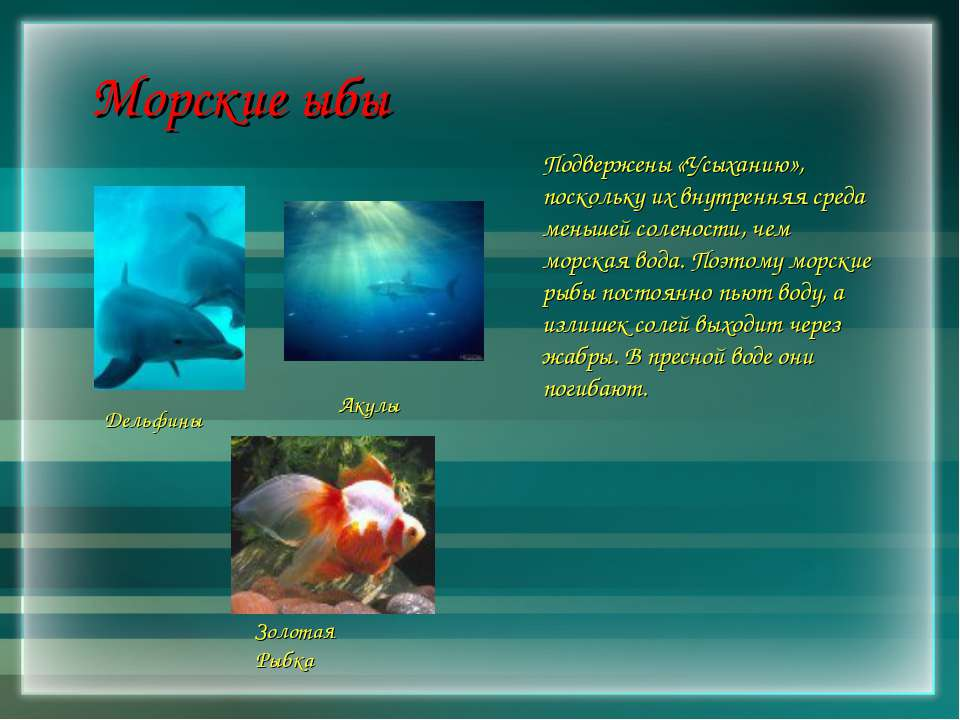 Морские ыбы Подвержены «Усыханию», поскольку их внутренняя среда меньшей соле...
