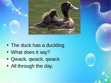 The duck has a duckling. What does it say? Qwack, qwack, qwack All through th...